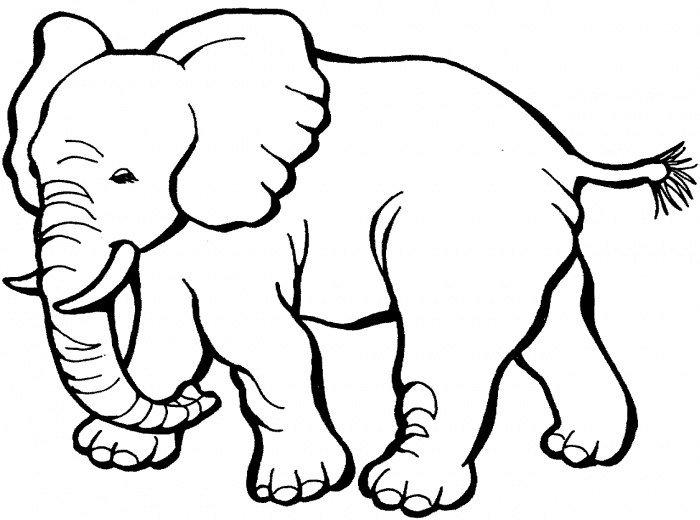 Elefante para colorear duba