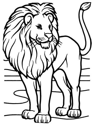 León Africano Macho Dibujo para colorear