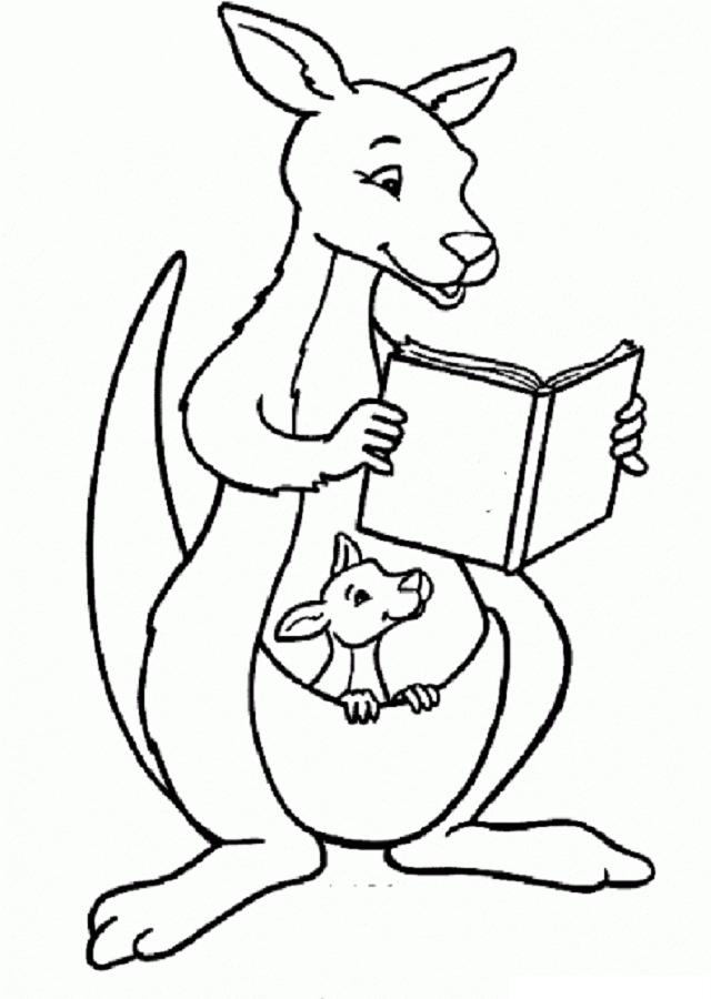 Dibujo canguro leyendo un libro para colorear